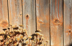Wood and dry flowers Royalty Free Stock Photography