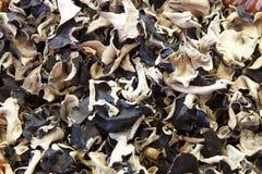 Wood ear mushrooms Stock Image