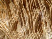 Wood effekt Royaltyfria Bilder