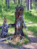 Wood elakt troll - hjälten av ryska sagor Han bor i skogFolk-kännedomen Royaltyfri Bild