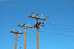 Wood electricity poles Stock Image