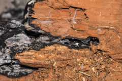Wood embers detail in fire place Stock Photos