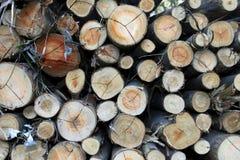 wood of eucalyptus Royalty Free Stock Photos
