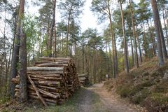 Wood in european forest Royalty Free Stock Images
