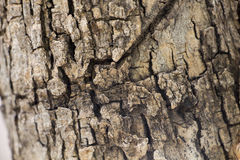 Wood texture. Explanation of the texture of the wood which can be used as samples royalty free stock images