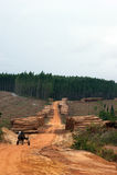 Wood exploitation Stock Photo
