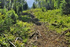 Wood exploitation funicular path Stock Photography