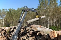 Wood exploiting Stock Photo