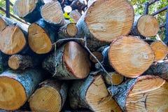 Wood förberedelse Royaltyfria Foton