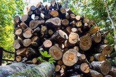 Wood förberedelse Arkivbild