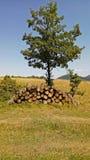 Wood förråd i skogen Royaltyfria Bilder