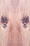 Wood face Stock Images