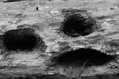 Wood face hole wooden pokerface scream deadpan stock photo