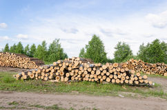 Wood fell industry. Stack birch and pine tree logs Stock Images