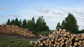 Wood felling industry. Stack birch and pine tree logs in autumn stock video footage