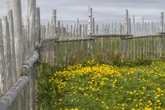 Wood fence around grass and dandelions