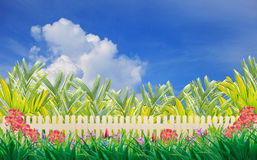 Wood fence and flower in home garden wiht blue sky Stock Photography