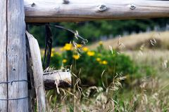 Wood fence in the foreground and flowers. In the background royalty free stock photography