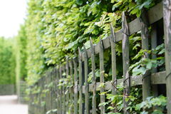 A wood fence in the gardens of Versailles. Paris, France Stock Image