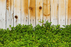 Wood Fence with Plants Stock Photo