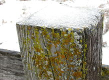 Wood Fence post With Ice Stock Photography