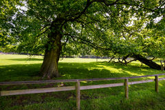Wood fence and trees Stock Image