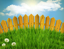 Wood fence and white flowers. vector illustration
