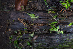 Wood and fern. Wet wood and fern look on top Stock Photography