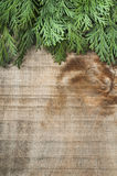Wood and fir branches background Royalty Free Stock Image