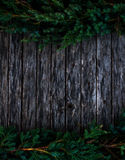 Wood and fir Stock Photography