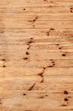 Wood fir texture Stock Photography