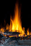 Wood fire. Burning wood fire with flames Stock Photography