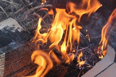 Branched Flame photo royalty free stock photos