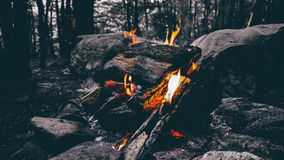 Wood Fire Camping on Forest Stock Image