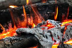 Wood Fire And Ember. Burning wood, ember and logs on fire. Camp fire Royalty Free Stock Photography