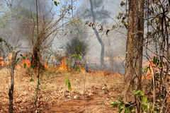 Bushfire. Photo image  with forest and fire Royalty Free Stock Photography