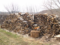 Wood. Firewood in the woods kitty Royalty Free Stock Photography