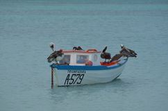 Wood Fisherman`s Boat with Pelicans on It Stock Photography