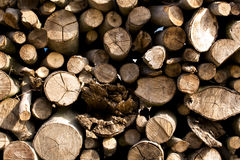 Wood flattened into neat stacks Royalty Free Stock Image