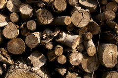 Wood flattened into neat stacks Stock Images
