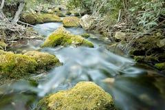 Wood flod i sommar Arkivfoton