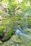 Wood flod i sommar Fotografering för Bildbyråer