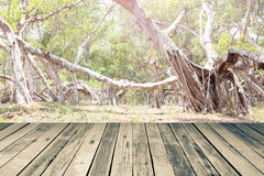 Wood floor on big tree root Royalty Free Stock Photography