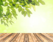 Wood floor and fresh leaves on green background Royalty Free Stock Photography