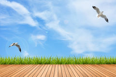 Wood floor and grass under blue sky and birds Royalty Free Stock Photography
