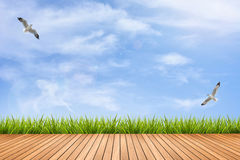 Wood floor and grass under blue sky and birds Royalty Free Stock Images