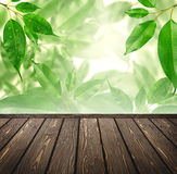 Wood floor with green bokeh . Royalty Free Stock Image
