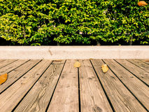 Wood floor and green leave bush (background) Stock Image
