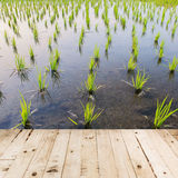 Wood floor and rice field Stock Images