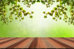 Wood Floor Spring Decoration Background. Bright decoration green spring nature background with wood floor Royalty Free Stock Photography